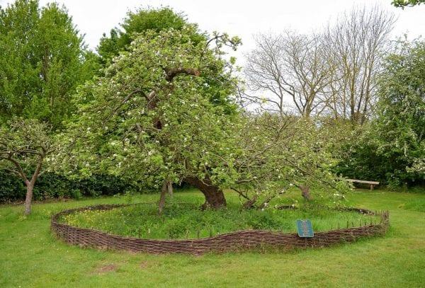 سر شجرة نيوتن.. أين هي الآن؟