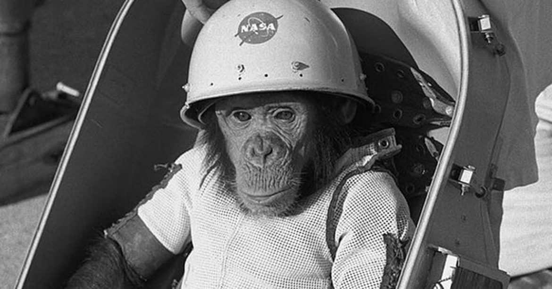"""القرد """"هام"""".. بوابة """"ناسا"""" إلى الفضاء الخارجي"""