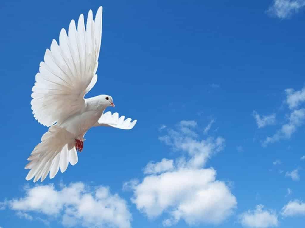 في يومه العالمي.. ماذا قال المشاهير من حول العالم عن السلام؟