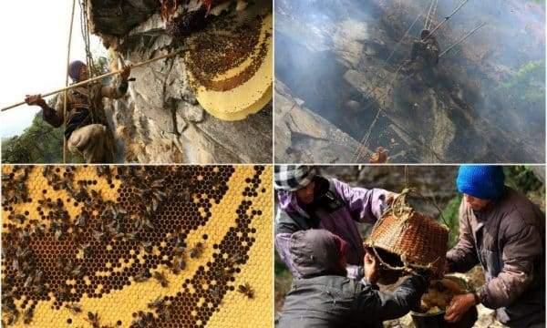 أخطر عسل في العالم.. يتسبب في الهلاوس والشلل المؤقت ويباع كعلاج