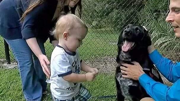"""كيف كشف الكلب """"كيليان"""" جريمة مربية الأطفال مع الرضيع؟"""