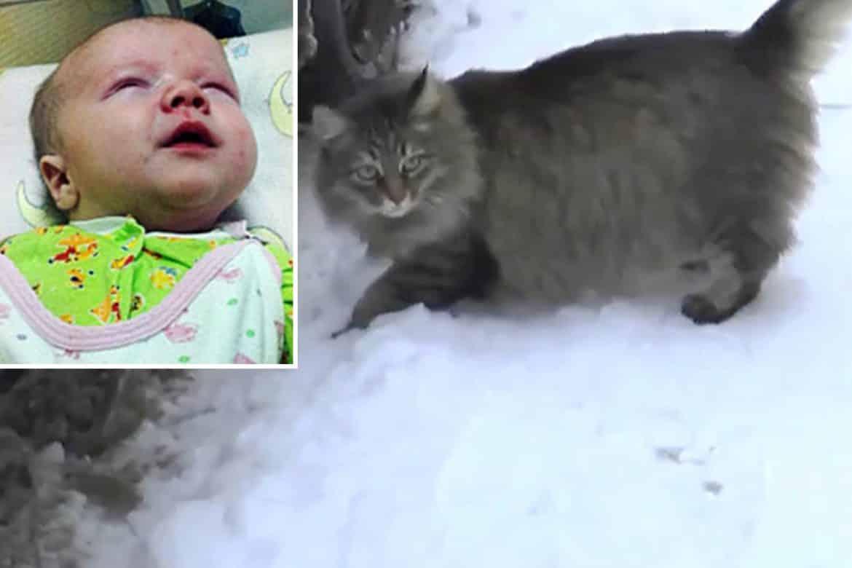 كيف أنقذت القطة الصغيرة رضيعا من الموت في الصقيع؟