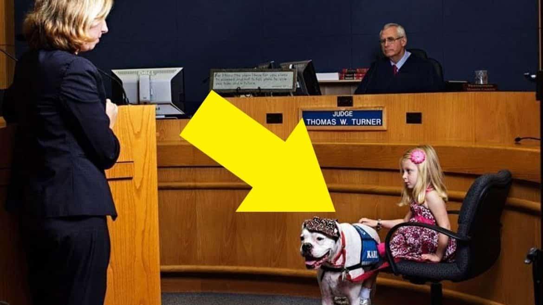 كارل.. كلب كفيف لمساعدة الأطفال أثناء الشهادة في المحكمة!