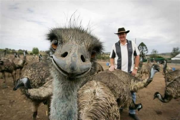 صدق أو لاتصدق...صور سيلفي التقطت من قبل الحيوانات