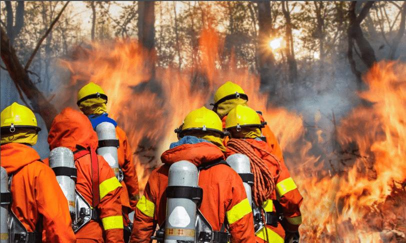 بالصور: أشهر حرائق الغابات في التاريخ