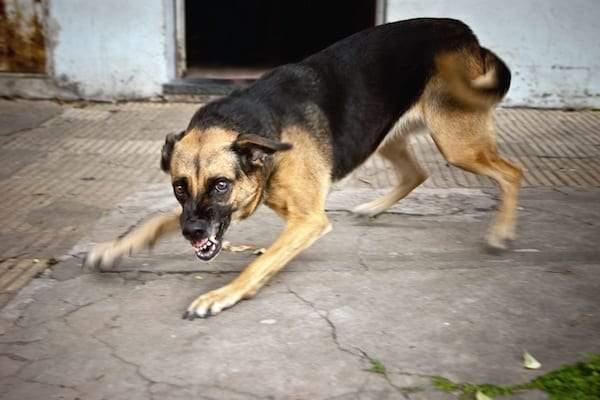ماذا تفعل عند التعرض لهجوم كلب؟