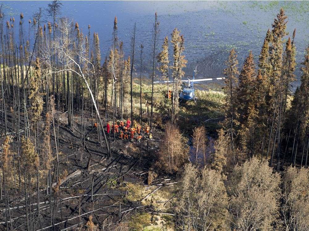كيف نجا رجل تائه من الموت في الغابات عبر كسر أعمدة الكهرباء؟