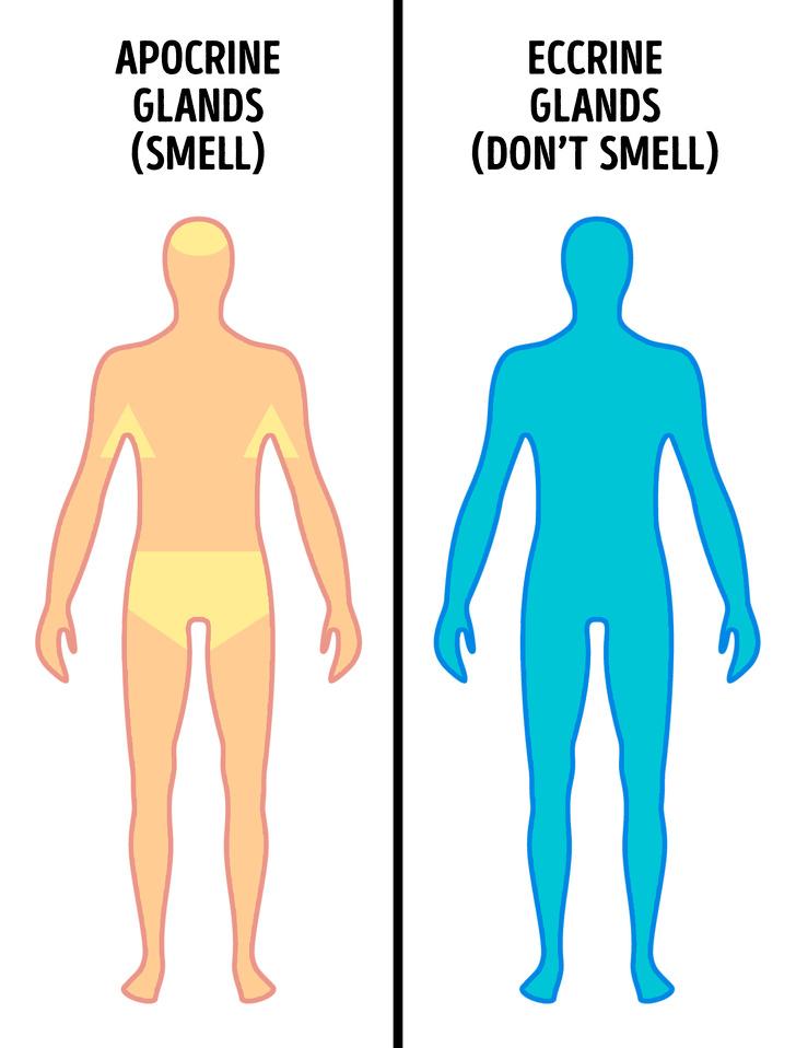 رائحة العرق وصعوبة الإستيقاظ وأشياء أخرى تسبب توتر لنا سوف نخبرك بأسبابها