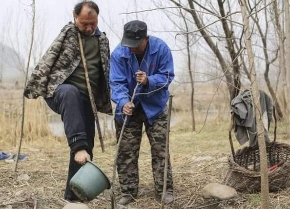 صديقان للبيئة.. كفيف ومبتور الذراعين ينجحا في زراعة آلاف الأشجار في الصين