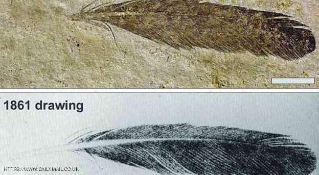ريشة الديناصور