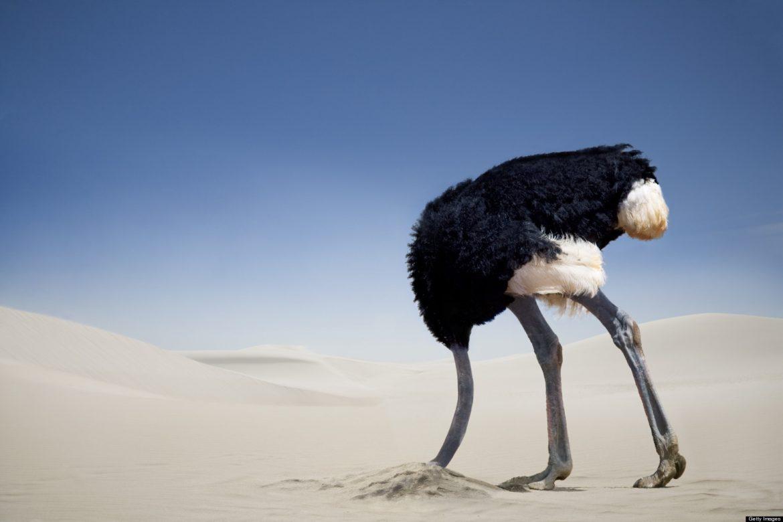هل يدفن النعام رأسه في الرمال حقًا؟