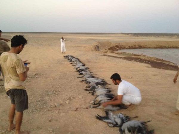 أكثر 10 حيوانات اصطيادا في السعودية وأماكن تواجدها 1