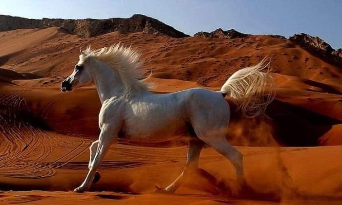 6 مواصفات تميز الخيول العربية الأصيلة