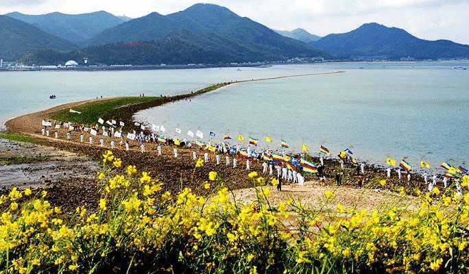 سنويا بكوريا الجنوبية.. انشقاق البحر في جزيرة جيندو