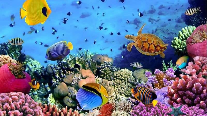 «لا تتنفس وتغير لونها».. 8 معلومات غريبة عن عالم الأسماك