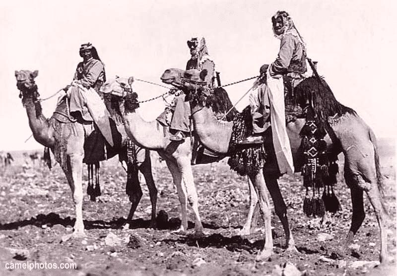 خصائص البدو