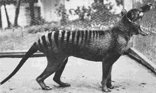 5 صور لحيوانات نادرة تعرضت للانقراض