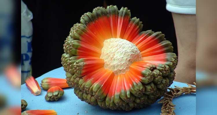 هلا الفاكهة