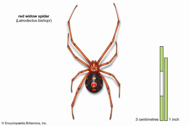 من 43 ألف نوع.. أخطر 3 «عناكب» قاتلة في العالم