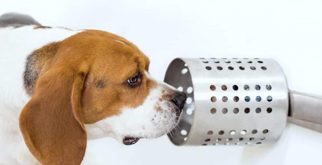 بنسبة نجاح 97%.. الكلاب قادرة على شم السرطان!