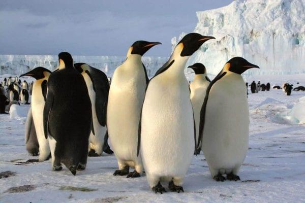 البطريق والكاسوري.. 5 أنواع من الطيور لا يمكنها الطيران 1