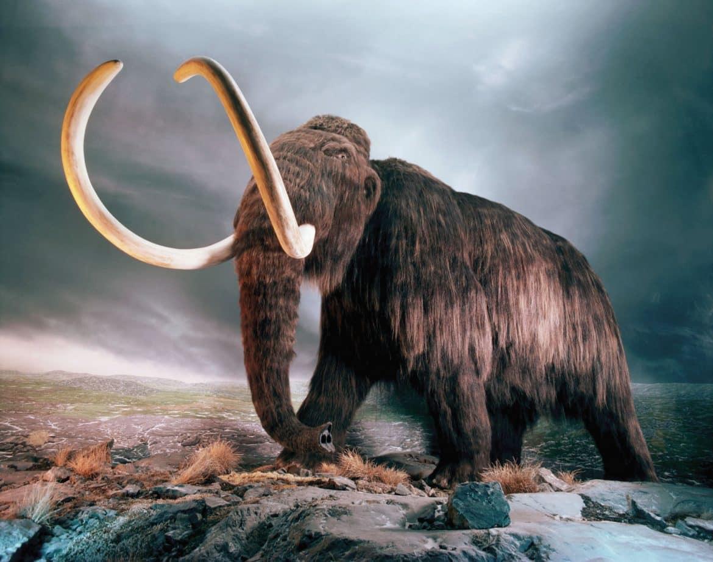 5 كائنات أكلها البشر حتى الانقراض