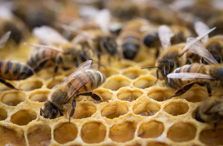 5 استخدامات مذهلة لعسل النحل