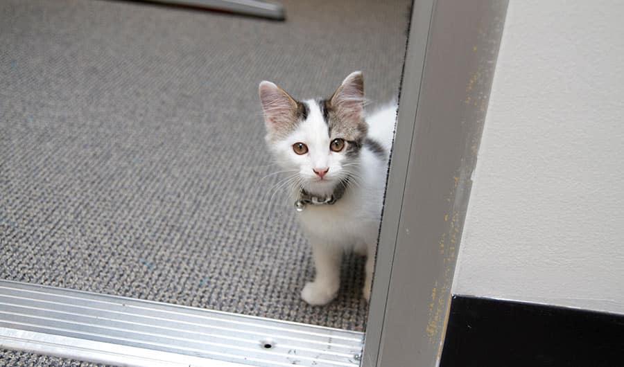 """علماء اليابان: """"القطط يمكنها التعرف على أسمائها"""""""