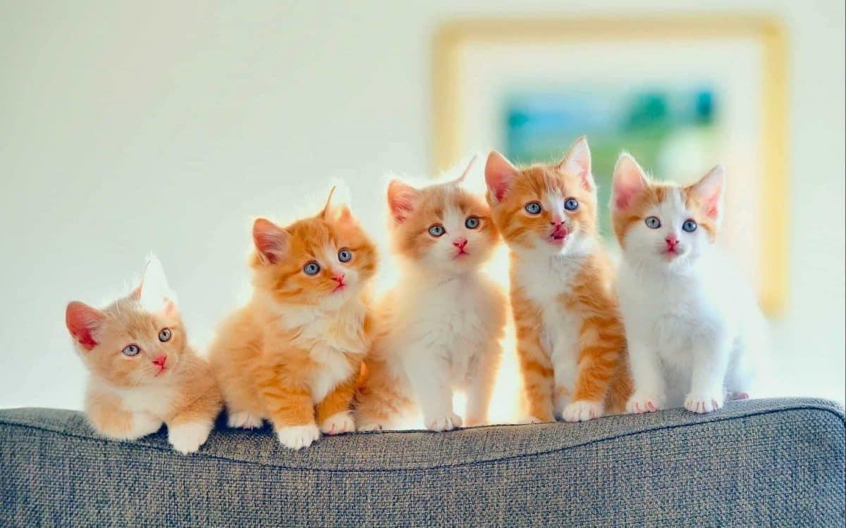 """حياة القطط وصفاتها الغامضة """"ملف شامل"""""""
