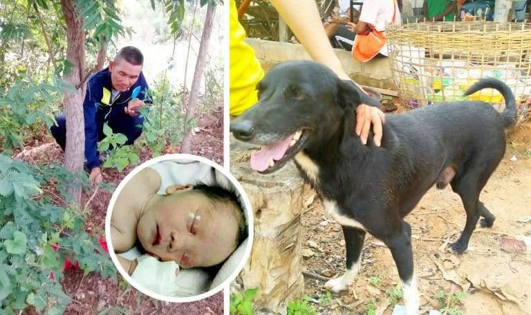 كيف أنقذ كلب حياة رضيع من الموت؟