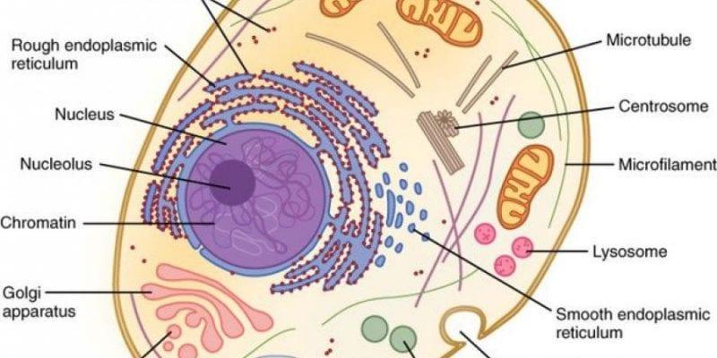 كيف فسر العلم نظرية الخلية؟ 2