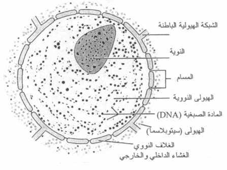 كيف فسر العلم نظرية الخلية؟ 1