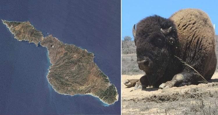 7 جزر عجيبة تقع تحت سيطرة الحيوانات