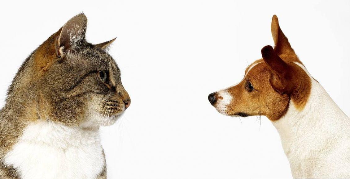 شخصيتك من خلال حيوانك الأليف.. كلب أم قطة؟
