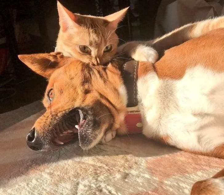صور طريفة تشهد تحول الحيوانات الأليفة إلى مثيري شغب