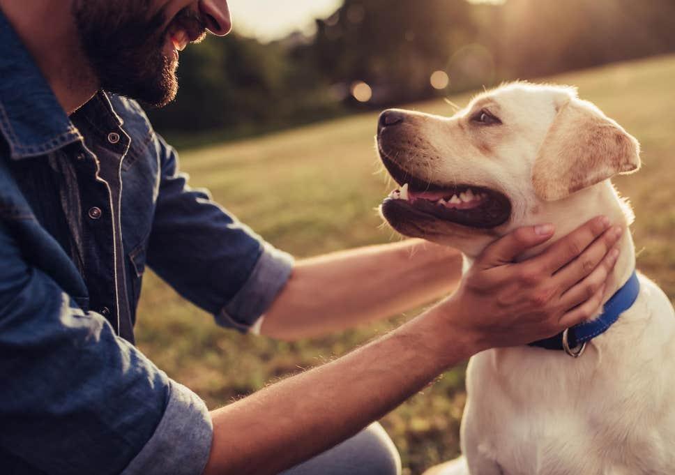كيف تؤدي تربية الكلاب إلى إطالة العمر؟