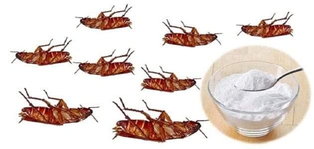 6 طرق سهلة ومنزلية لمكافحة الصراصير