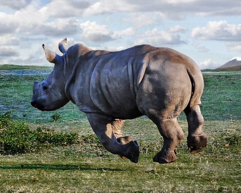 حقائق عن الحيوانات.. ربما تعيد تفكيرك عن تلك الكائنات العجيبة