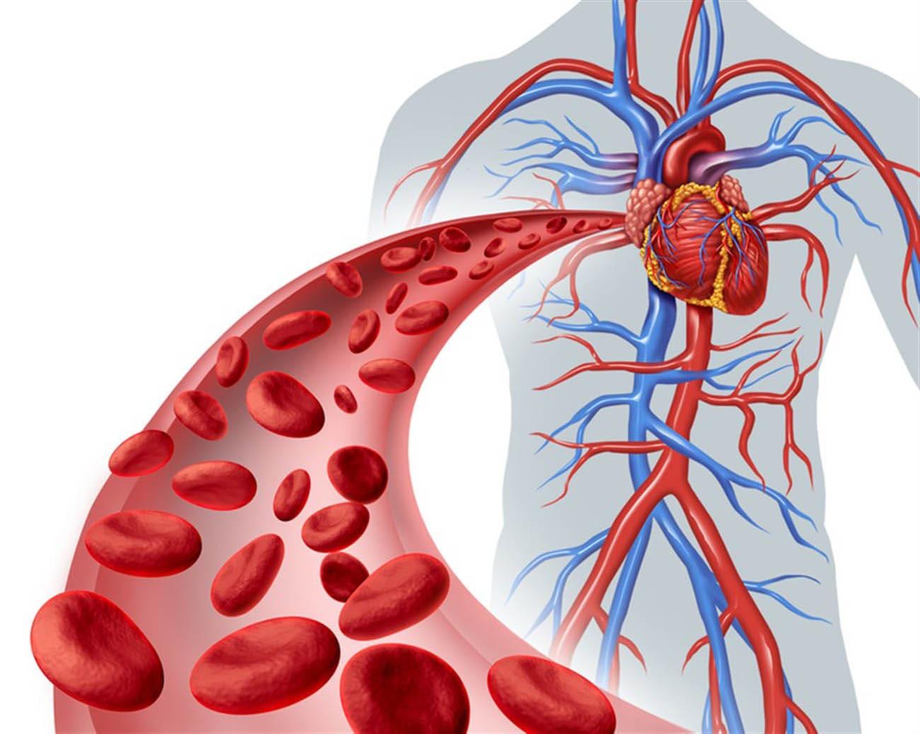 طرق طبيعية من أجل تنشيط الدورة الدموية