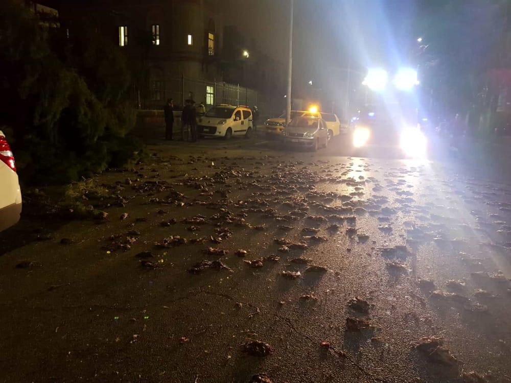 هل تسبب انتشار فيروس كورونا في إيطاليا في سقوط الطيور ميتة بالشوارع؟