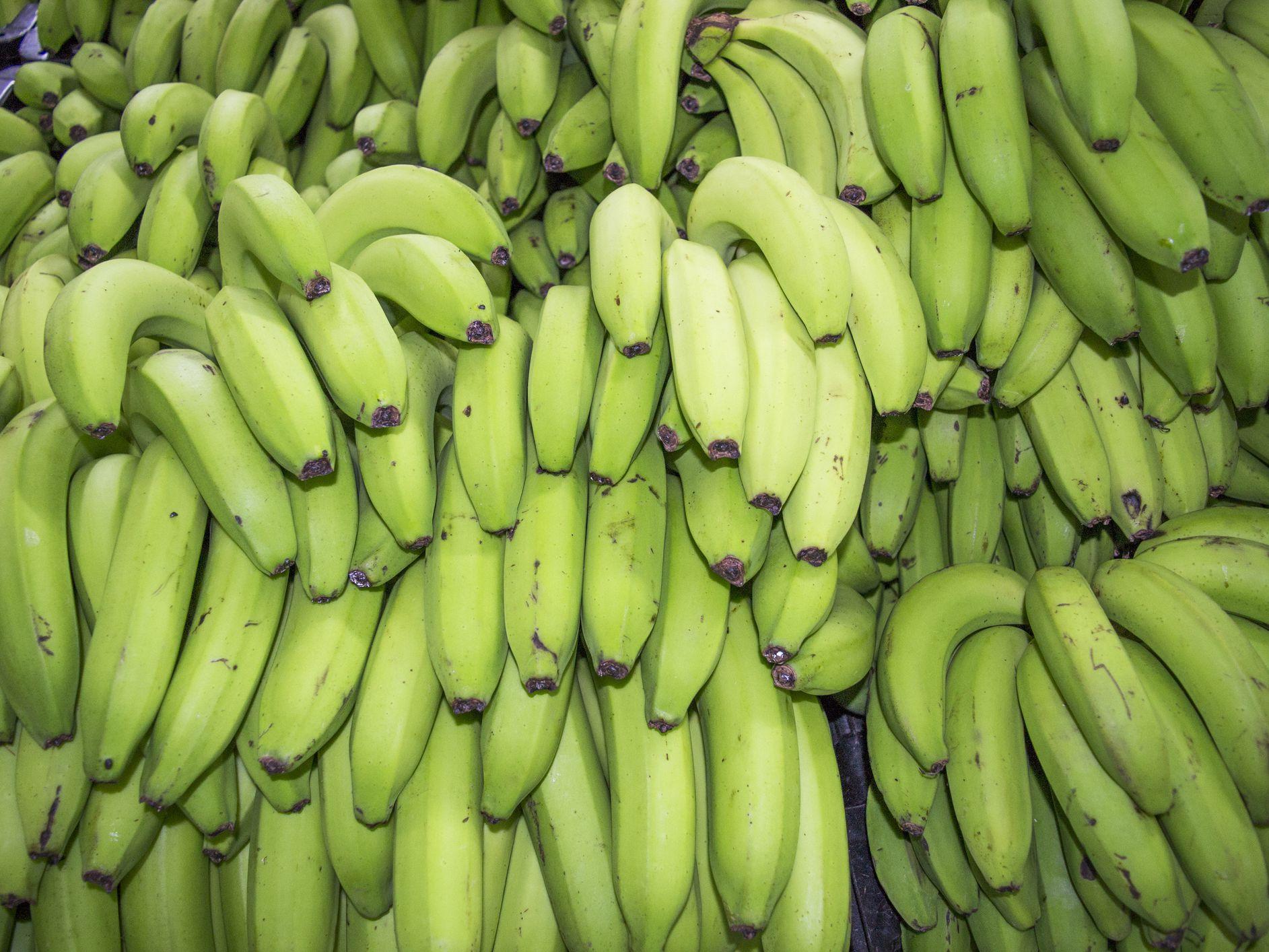 الموز الأخضر.. هل هو مفيد للصحة؟