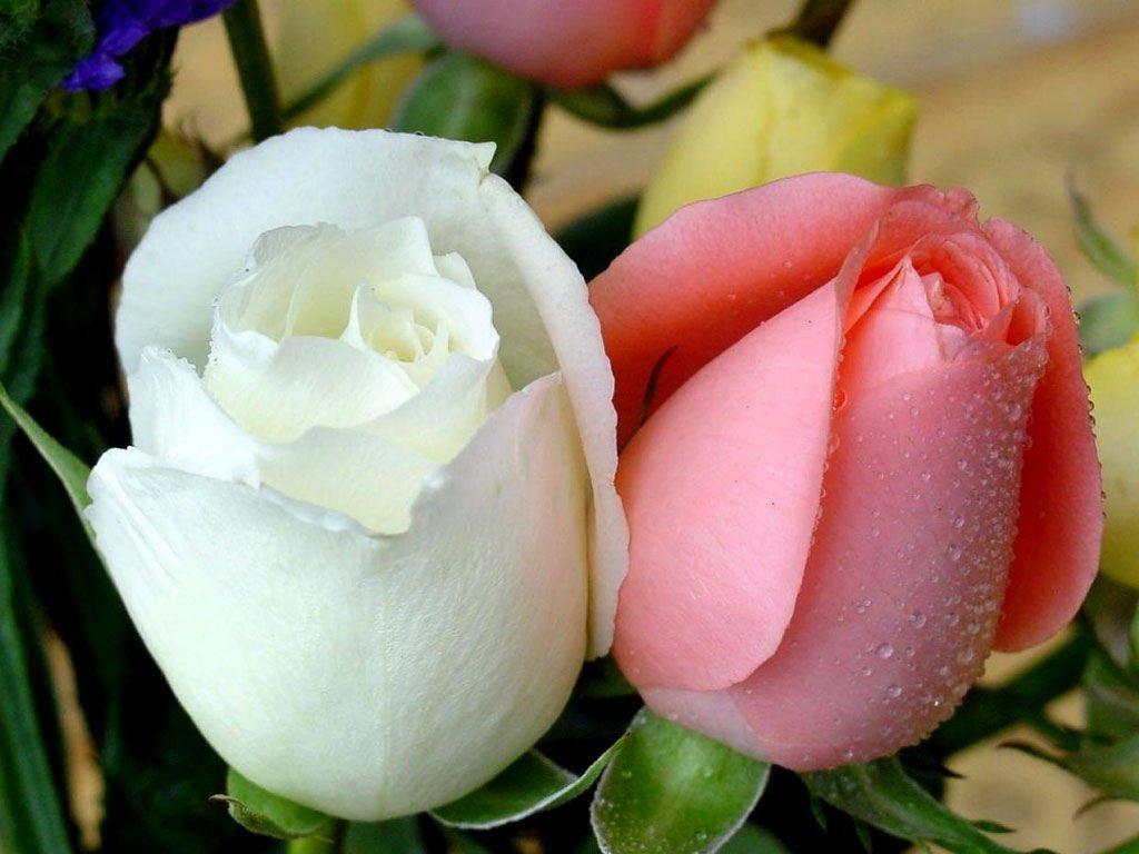 أغلى 10 زهور في العالم