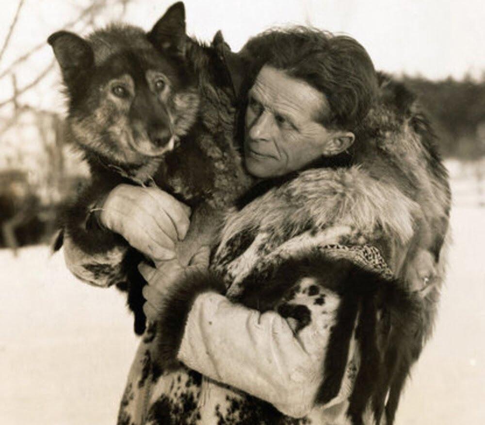 الكلب توجو.. الحيوان الذي أنقذ حياة آلاف البشر من العدوى